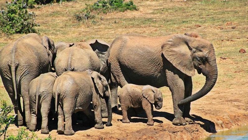 Elefantes no Kruger National Park em Joanesburgo