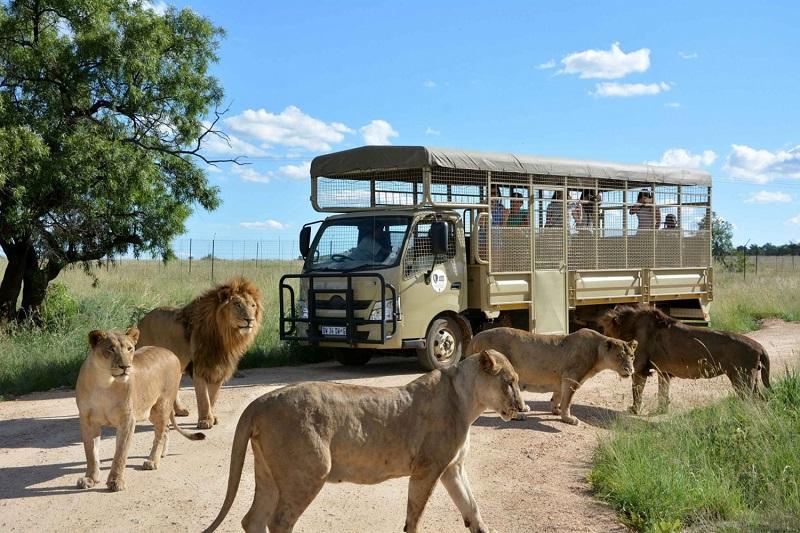 Passeio no Lion Park em Joanesburgo