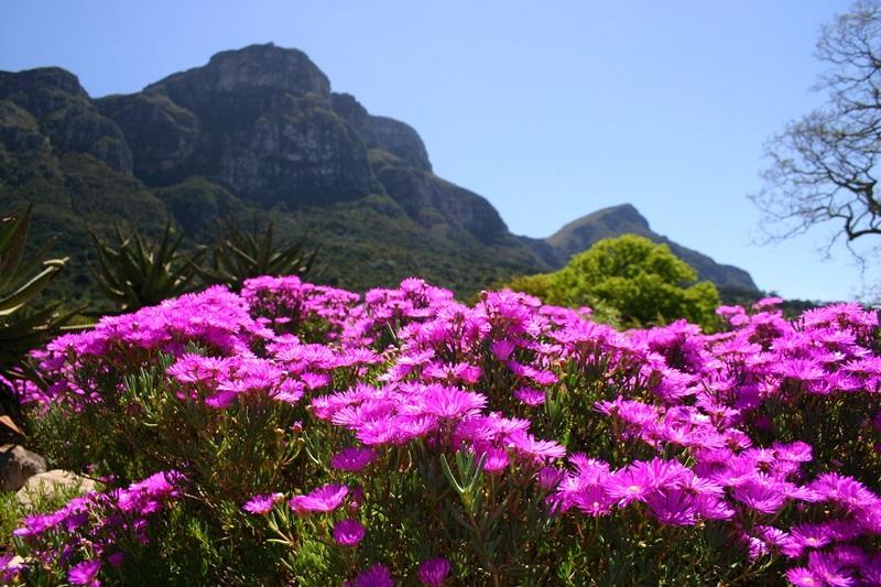 Primavera na Cidade do Cabo
