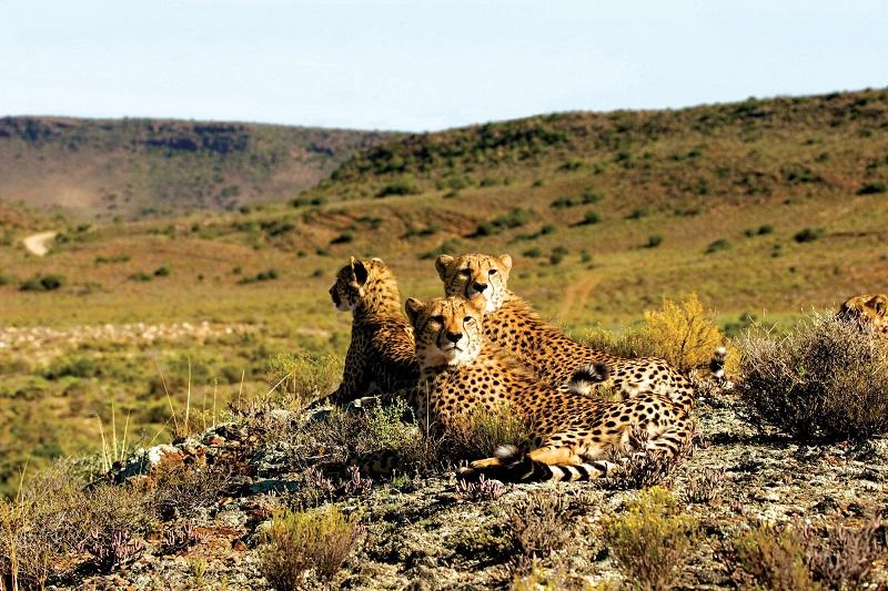 Animais em Sanbona Wildlife Reserve