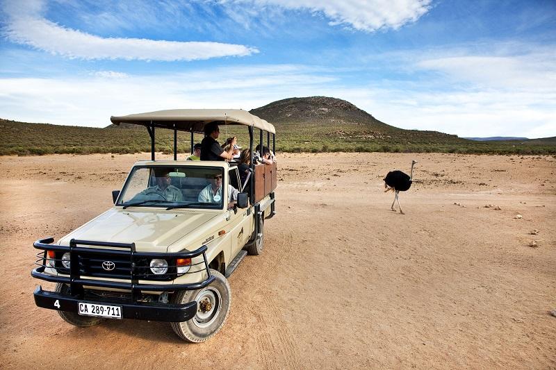 Caminhonete em Aquila Private Game Reserve Cidade do Cabo