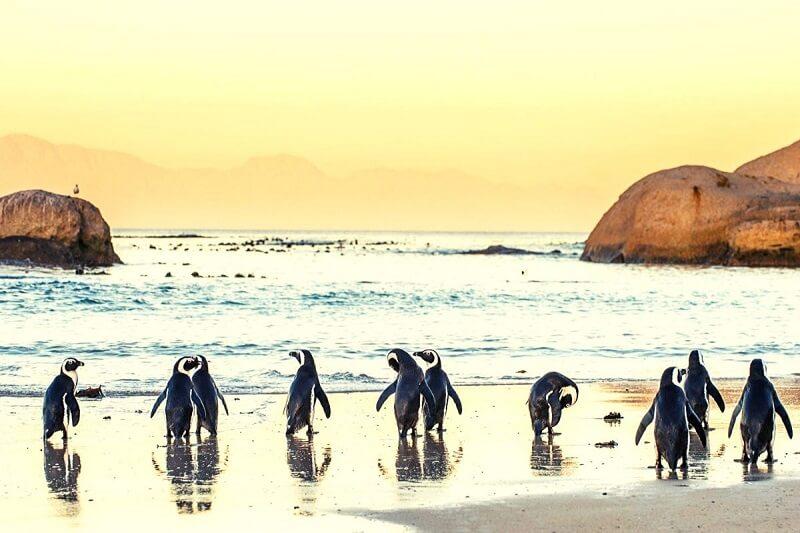 Pinguins em praia da Cidade do Cabo