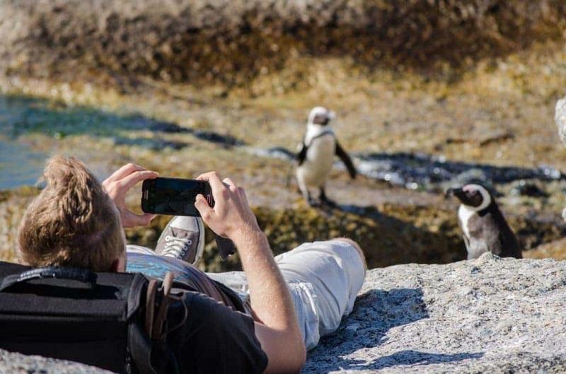 Turista fotografando pinguins em Boulders Beach