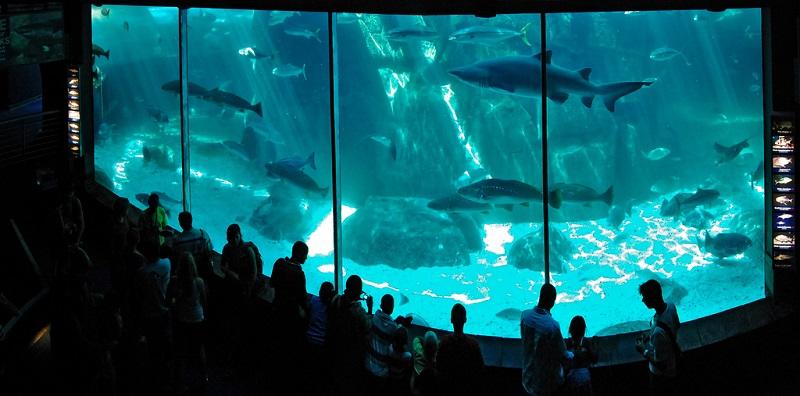 Two Oceans Aquarium - Cidade do Cabo