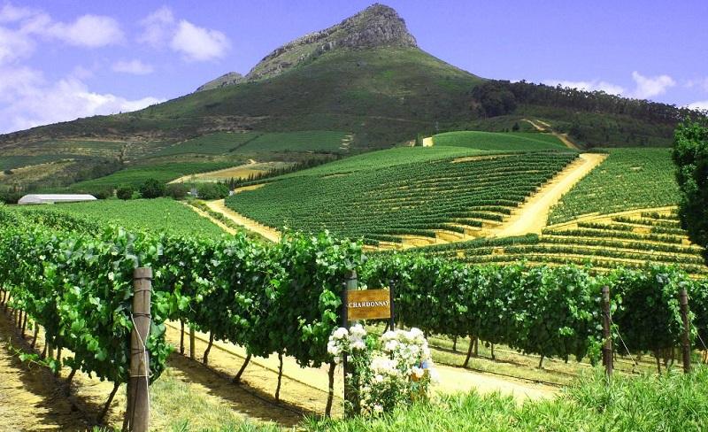 Tour de vinhedos por Stellenbosch